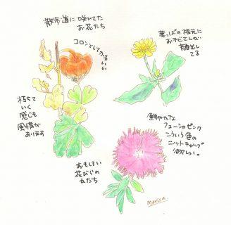 秋の草花スケッチ