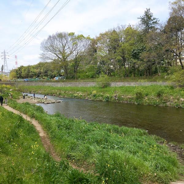 境川の遊歩道から見た風景