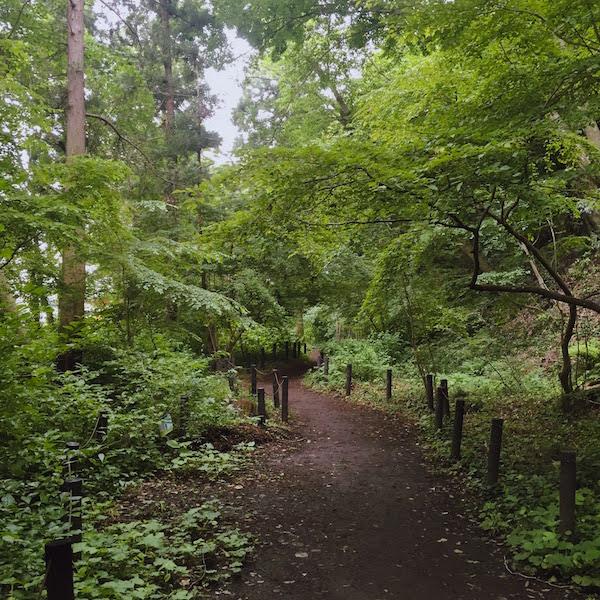 森の中を散歩